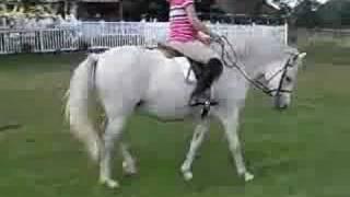 riding folly