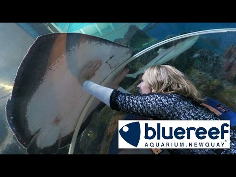 Newquay Blue Reef Aquarium