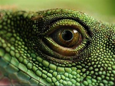 Man's Four Brains Pt 1: The Reptilian Brain