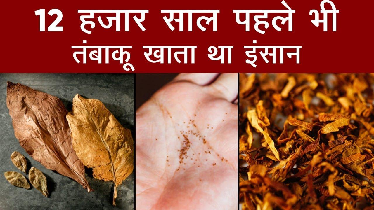 12 हजार साल पहले भी तंबाकू खाता था इंसान, यहां मिले सबूत