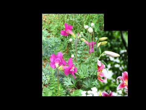 Дрема белая (растение) – полезные свойства и применение