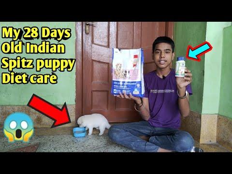 28 Days Old My Indian Spitz Puppy Diet Care  Indian Spitz care  Indian Spitz puppy