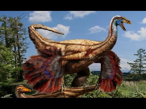 Doku in HD Der Traum vom Fliegen - Wie haben Tiere die Luft erobert