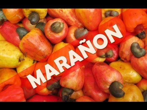 ☞ Beneficios del té de hojas de marañón o anacardo para la salud del organismo