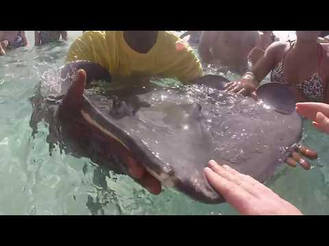 Sting Ray City Grand Cayman Island