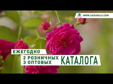 "Каталог ""Весна 2020"". Питомник ""Сады Урала"""