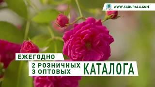 Каталог quot;Весна 2020quot;. Питомник quot;Сады Уралаquot;