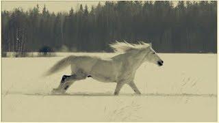 Белая лошадь. Короткометражный фильм.