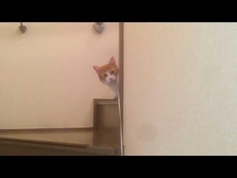 来客者の様子を伺う猫 A cat asking the visitor's state『保護猫るる らら物語』
