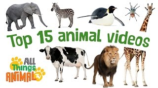 TOP 15 ANIMAL VIDEOS | Animals Playlist for children. 25 MINS LONG. Kids videos. Preschool Learning