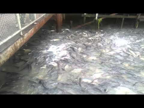 Очень голодная рыба - The Very Hungry Fish