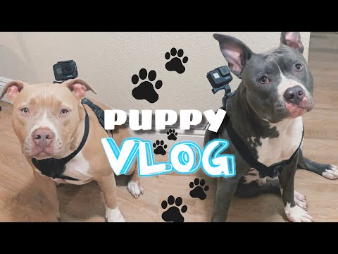 OUR DOGS CONTROL OUR VLOG FOR A DAY!!! *SO CUTE*