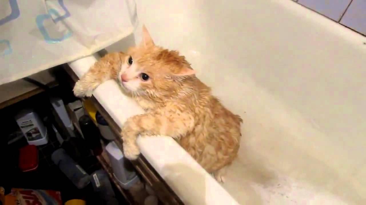 Гифка кошечка в ванной