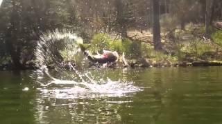Bass Jumping Compilation