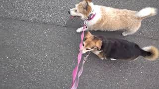 http://osanpoikuyo.blog112.fc2.com/ 犬と猫と☆ https://www.instagram...