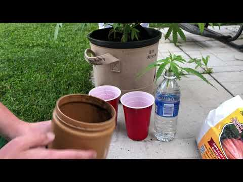 How To Clone Cannabis - Cloning Your Marijuana