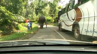 crazy elephant in kerala