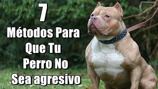 7 Métodos Para Que Tu Perro No Sea agresivo ni peligroso (Pitbull, Rottweiler, Bull terrier, etc.)