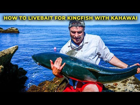 HOW TO CATCH KINGFISH WITH LIVE BAIT KAHAWAI