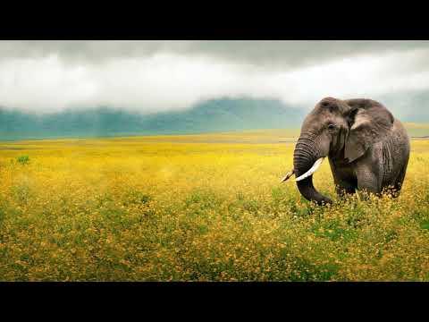 TEKIU - Wonderful chill out music (Africa, Asia, Oriental theme mix)