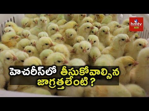 Poultry Farming - Hatchery | Ideal Farmer Ravinder Reddy Tips | hmtv Agri