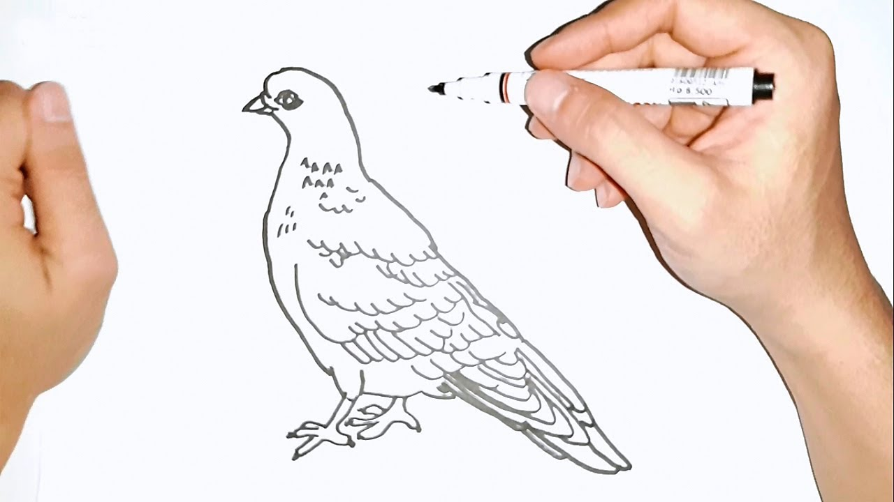 How To Draw Pigeon Step By Step