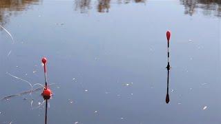 РАДИ ТАКИХ ПОКЛЕВОК СТОИЛО СЮДА ЕХАТЬ Рыбалка на поплавок весной 2020