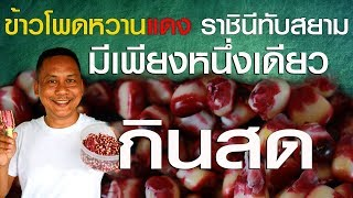 ข้าวโพดหวานแดง ราชินี่ทับทิมสยาม หนึ่งเดียวในโลก ป้อมซังเกษตรสร้างชีวิต