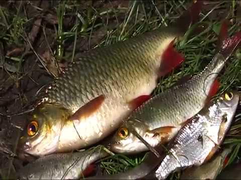бесплатно ловля рыбы острогой ночью речки
