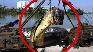 10 CRIATURAS MORTAIS DA AMAZÔNIA !!