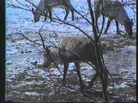 Sodankylän paikallis tv 1989