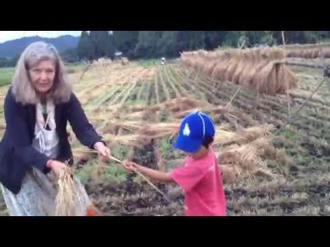 Tradtional Drying and Gleaning of Wheat  in Ise, Japan
