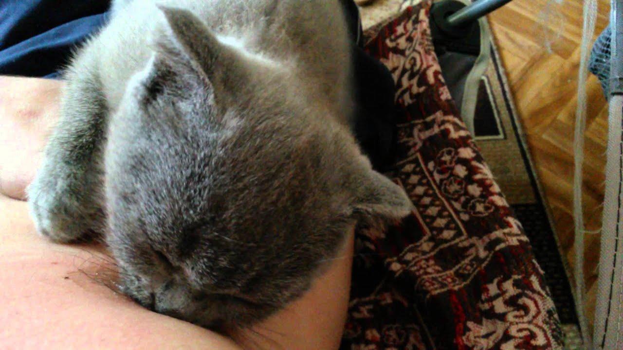 отучить сосать как уши кошку
