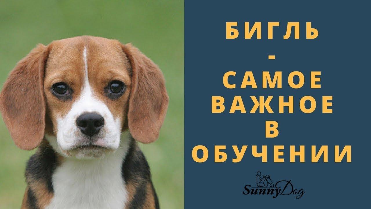Что нужно для появления щенка в доме?) - YouTube