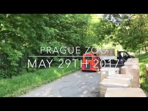 Bigbelly - Prague Zoo 2017  (no audio)