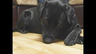 Нижнекамец стал обладателем собаки почти за 1 млн рублей