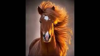 Değişik at kişneme ve ayak sesleri
