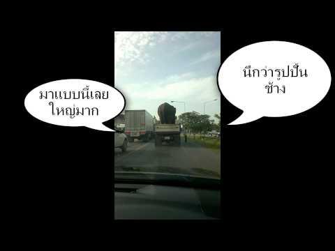 ช้างจริง ไม่ใช่รูปปั้น ตัวใหญ่กว่ารถบรรทุกซะอีก (ตอนแรกนึกว่ารูปปั้น)