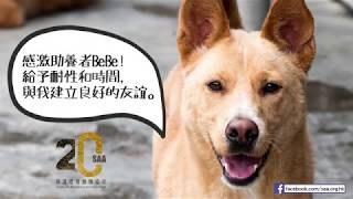 SAA 動物助養計劃 - 狗狗Car篇