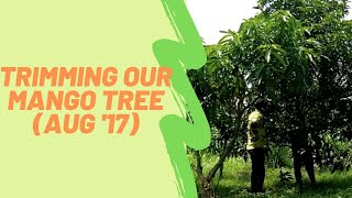 Trees at Aanandaa | Trimming our Mango tree