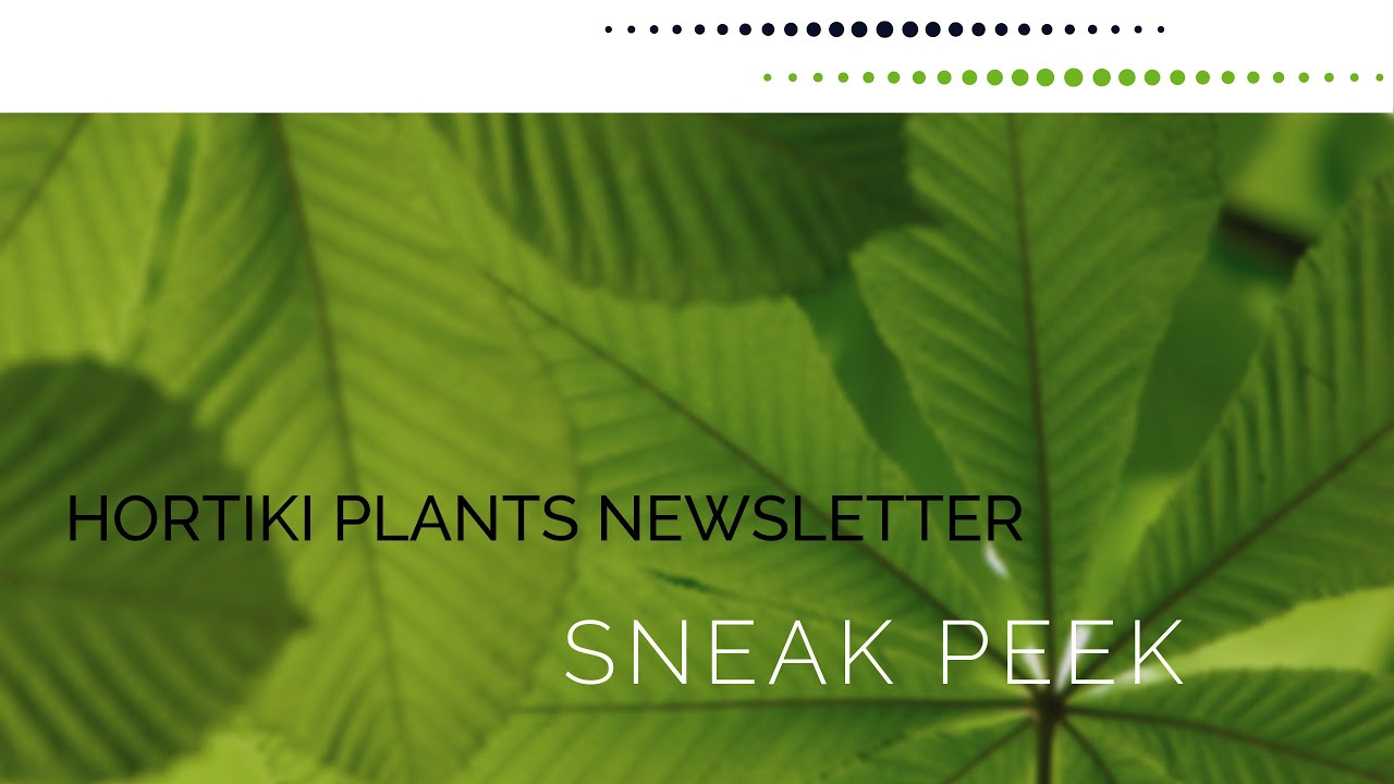 Hortiki Plants Newsletter Sneak Peek