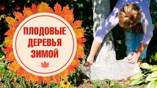 Подготовка плодовых деревьев к зиме ➡ Чем обработать ✅ Как укрыть ✅ Защитить от вредителей