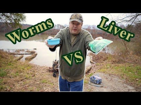 Nightcrawlers Vs Chicken Liver   Most Popular Catfish Bait Challenge?