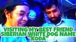 SIBERIAN HUSKY WHITE DOG NAME KODA