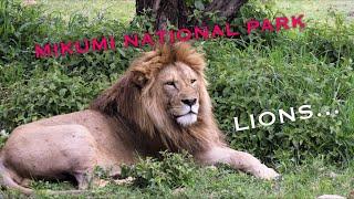 Safari to Mikumi National Park, Tanzania  vid#1