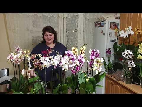 Новый завоз роскошных орхидей от JMP на продажу#Посылки с корой#Новая страница ВК