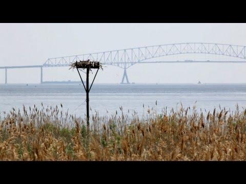 Restoration Spotlight: Urban wetland provides refuge for Baltimore wildlife