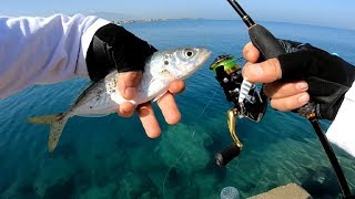 Ultra Light Takım ile İstavrit - Trakonya - Melanur Avları / Light Rock Fishing