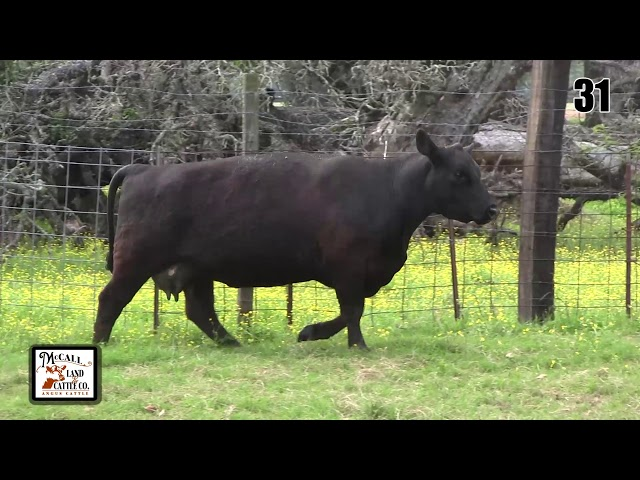 McCall Land and Cattle Lot 31
