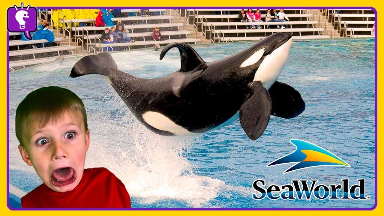 SEAWORLD Roller Coasters! Dolphins and Whales -- Vacation Trip 2018 with HobbyKidsTV